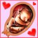 Pregnancy Week by week MOD
